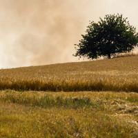 A zatímco mnohomanželé tancují, za horizontem hoří pole...